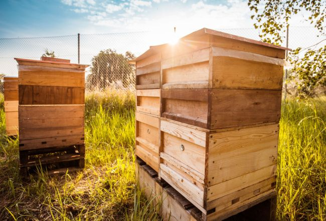 Porsche отглеждат пчели в свой завод